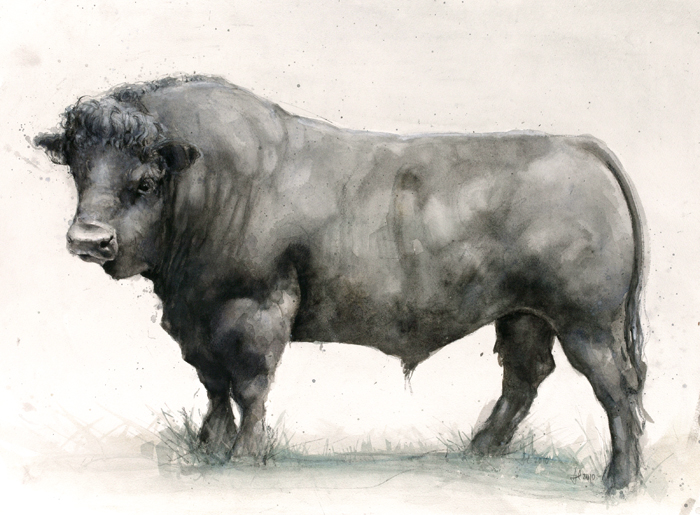 BlackWelshBull-watercol-2323_0002