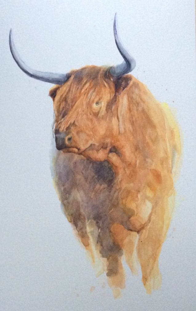 Highland beast watercolour SOLD