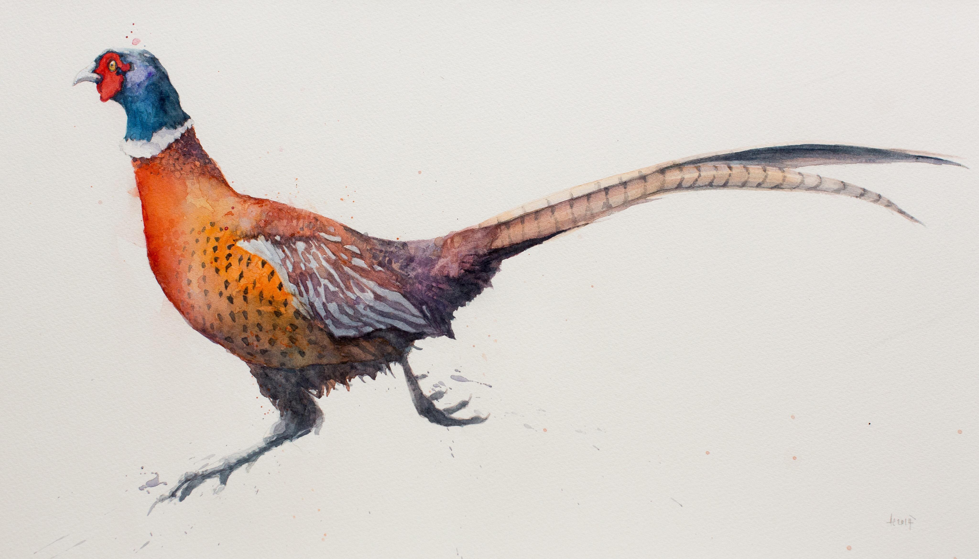 Running Pheasant 1 wat...
