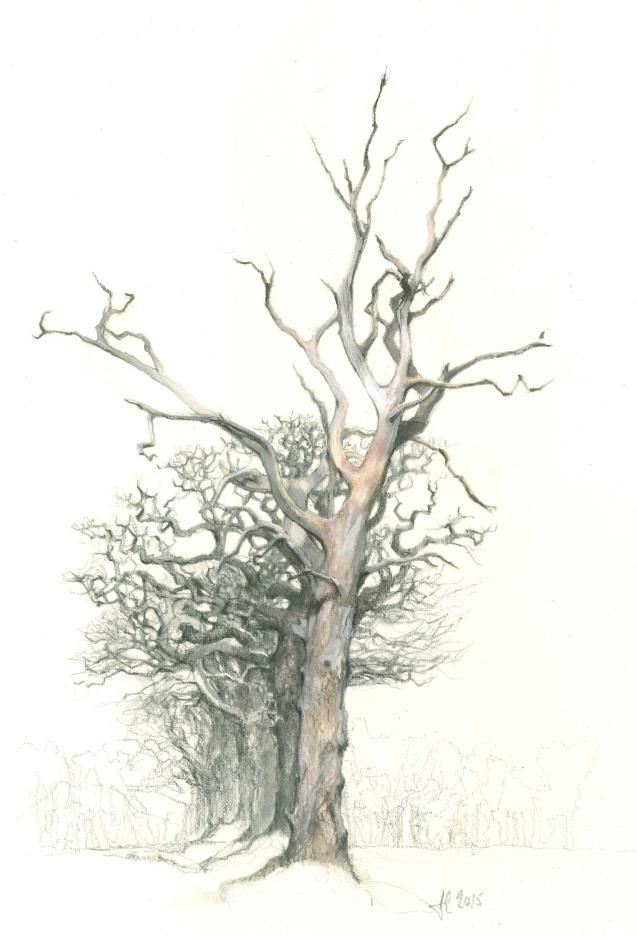 Dead tree Barton turf, 25/1/2015