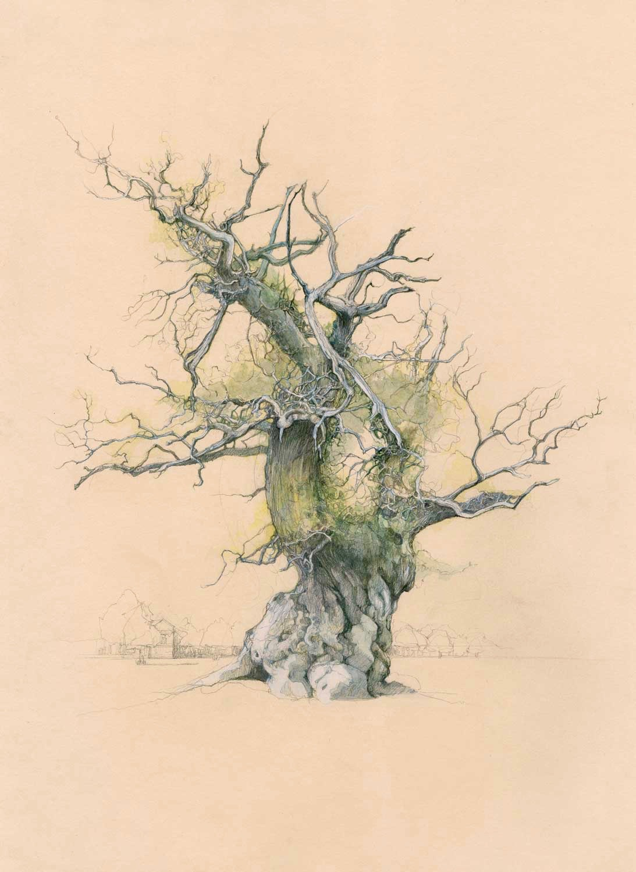 Twisted-Oak-2-Houghton008